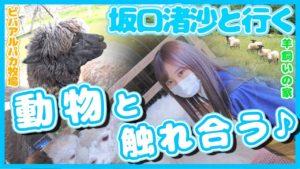 AKB48坂口渚沙:なぎなぎTubeが「[アルパカ]に会いに[北海道]剣淵町へ🦙」を公開